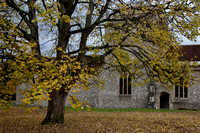 Autumn colours in the former churchyard of St Mary's, Kingsclere, Berkshire